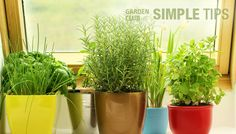 Even in the last weeks of winter, you can still garden indoors, growing a windowsill of green. Rosemary, chives, oregano, thyme, lemongrass and mint are the easiest herbs to grow in a sunny window. And when the weather warms up, you can take move them outside for another season of goodness.