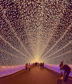 """Touka no Kyouen"" the spectacular light show takes place in Nagashima Resort's theme park Nabana no Sato in Nagoya,"