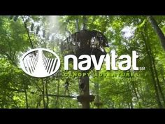 An awesomely fun zipline adventure park in Knoxville, TN - Navitat Canopy Adventures' Ijams Canopy Experience