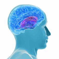 GABA-activity-brain-withdrawal-benzos