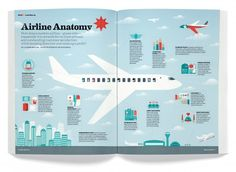 Airline anatomy