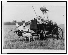 """Blog post: """"Please pass the slow twitch fiber…""""  by Jennifer Harbster, November 24, 2009. Photograph: [Boy in wagon drawn by two harnessed turkeys]. 1909 Jan 28. Miscellaneous Items in High Demand, Library of Congress Prints and Photographs Division."""