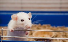 <p>The inspiring stories of the rescued laboratory animals below – who managed to overcome the odds and learn how to trust again – will make it clear exactly why animal testing should come to an end as soon as possible.</p>