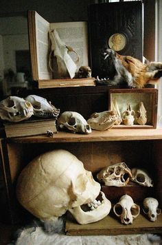 Cabinet of Natural Curiosities Cabinet Of Curiosities, Natural Curiosities, Curiosity Cabinet, The Rocky Horror Picture Show, Animal Bones, Ivy House, Gothic House, Gothic Mansion, Vanitas