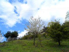 Kalvária - Trees..