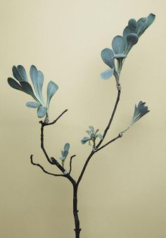 branch + foliage // Photo by Jonas Marguet Belle Plante, Foliage Plants, Arte Floral, Botanical Illustration, The Secret Garden, Houseplants, Indoor Plants, Dry Plants, Planting Flowers
