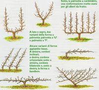 Piante e Fiori: Alberi e piante da frutto. Come sceglierle Biljke i cvijeće: Drveće i voćke. kako odabrati