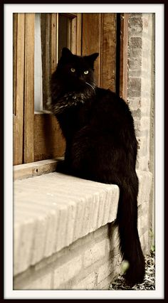 Black cat Beautiful black cat. Incensewoman. Black cats have trouble finding homes because of historical prejudices.
