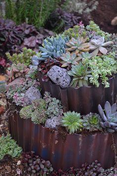 cool succulent arrangement!  I love the corrugated metal.