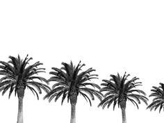 Poster schwarz weiß Palmen Passage Print von SundayVibesStudio