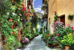 Spello (Italy)