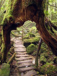 Primeval Forest, Yakushima, Japan    photo via tracey