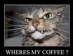 Wednesday Good Morning Meme | Monday Morning Blues - Where's My coffee