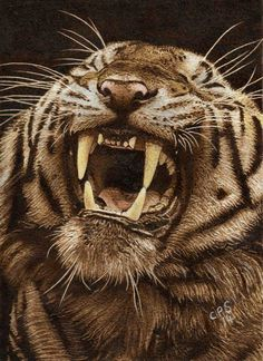 Tiger 3 by Clive Smith Pyrography Wood Burning Stencils, Wood Burning Crafts, Wood Burning Patterns, Wood Burning Art, Coffee Painting, Painting On Wood, Great Works Of Art, Got Wood, Africa Art