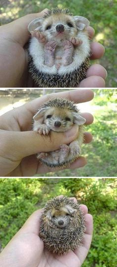When I first saw this I couldn't believe that it was real. Adorable Animal Pics