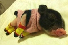 """He's so nice and warm in his pig-jamas..."""