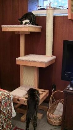 Cat Tree Review: The Cat Power Tower