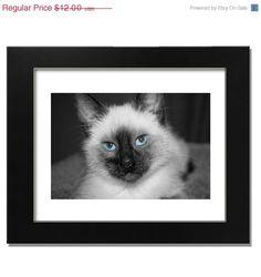 Groundhog  Sale Black & White SIamese Fine Art by BreathtakingArt, $9.60