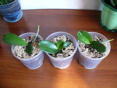 Best 11 garden design ideas for small gardens uk – SkillOfKing. Orchid Flower Arrangements, Propagating Plants, Plants, Growing Orchids, Small Garden Uk, House Plants, Orchids In Water, Orchids, Garden