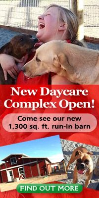 Doggie Day Care - Dairydell Canine - Dog Training and Boarding Dog Daycare, Sonoma County, Dog Boarding, The Ranch, Wine Country, Dog Days, Dog Training, Your Dog, Dog Lovers