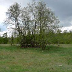 Norr om Finjasjön har man hittat fynd från Sveriges äldsta boplats. Människan slog läger vid sjöns strand redan under jägarstenåldern.