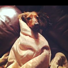 Dachshund obsession. My Sadie is the cutest