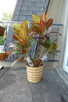 How to Air Layer A Plant