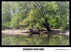 Digital Postcard Photo Old WILDERNESS RIVER RHINE  Germany
