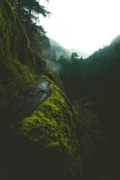 Expressions-of-nature: Eagle Creek Trail, Oregon by Mathias...