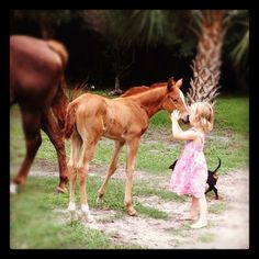 baby horse - Annabel! Love that name for a mare!