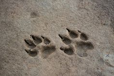 """(Open) I walk along the borders by the beach, this has to be one of my favorite places that's inside the borders to go. So peaceful and quiet, no one to bother you. I kneel down to look at the unknown paw prints when I hear. """"Wren?"""" I turn to see you."""