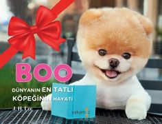 Turkish edition of Boo: The Life of the World's Cutest Dog!