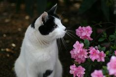 cats and flowers | Recent Photos The Commons Getty Collection Galleries World Map App ...