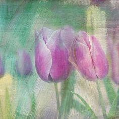 simply tulips by Teresa Pople #digitalart