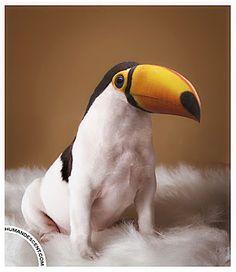 16 Fresh Animal Photo Manipulation Examples « Photoshop Photo Manipulations