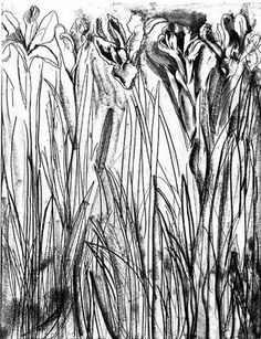 Black and White Flowers I by Jim Dine, Monoprint Plant Drawing, Painting & Drawing, Jim Dine, Black And White Flowers, New York Art, Abstract Nature, Nature Paintings, Print Artist, Botanical Art