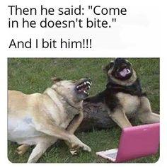 Memes Humor, Dog Memes, True Memes, Wtf Funny, Funny Laugh, Stupid Funny Memes, Funny Relatable Memes, Pretty Meme, Funny Stuff