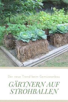 gärtnern auf strohballen: unabhängig vom untergrund und, Terrassen ideen
