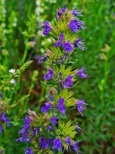 Top 20 Most Under-Rated Healing Herbs You Need To Know About