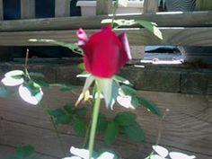 https://www.facebook.com/photo.php?fbid=10200340949230923