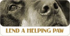 People animals Love, a volunteer group that lends a helping paw to children's programs, assisted living centers and many other worthwhile organizations.