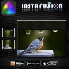 Instafusion Image Blender #instant #cameras #to #image #macro #superimpose #exposure #overlay #blend #daylight #distinct #camerazoomfx #menace #finishing #imaging #selfiemirror #reflectionphoto #instafusion#cloning #photoblend #adfree #solutions #tech #freephoto #pictures #photos #pics #overlay #exposure #typography #photoblend #used #merge ----------------------- Instafusion is a free photo blending app for Android.    http://app4smart.com/en/2992-image-blender-instafusion.html