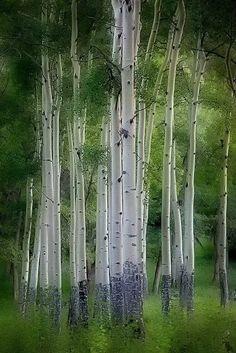 By Dan Makolondra