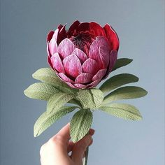 This lovely protea will join my autumn flowers for a colourfull flower arrangement. after so many pastel flowers it's nice to work with… Pastel Flowers, Fall Flowers, Flowers Nature, Diy Flowers, Beautiful Flowers, Crepe Paper Flowers Tutorial, Paper Flowers Craft, Paper Floral Arrangements, Flannel Flower