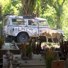 Eating lunch next to the lions with @cesira_murray #zoo#bali#lions#wildlife#restaurant#landrover#defender#landroverdefender#safari#lunch#food#holiday by muzzas_cars_bikes Eating lunch next to the lions with @cesira_murray #zoo#bali#lions#wildlife#restaurant#landrover#defender#landroverdefender#safari#lunch#food#holiday