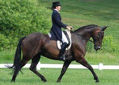 eventing stallion - Google-søk