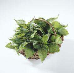 Chcete sa dostať čo najskôr do formy? Rozbehnite sa do prírody po žihľavu… Korn, Herbs, Vegetables, Health, Green, Plants, Medicine, Herbal Medicine, Health Care