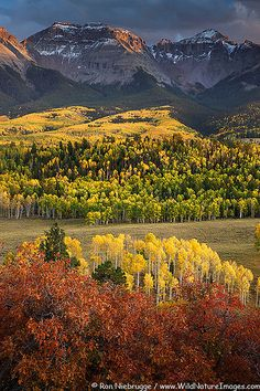 Fall colors at Sneffels-Range, San Juan Mountains, Colorado  (by Ron Niebrugge on Flickr)