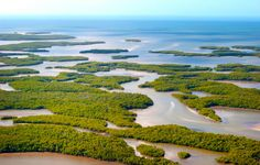 The Ten Thousand Islands extend northward from the northwest corner of Everglades National Park. These mangrove islands are uninhabited and stretch for 60 miles along the Gulf Coast. One of the best ways to explore this area is by boat. The surrounding estuary is home to birds like pelicans, ospreys, immature bald eagles and small water birds like egrets.