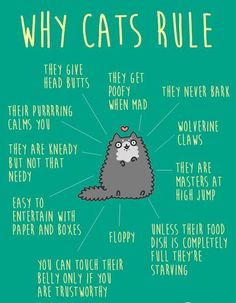 Why Cats Rule...so true!